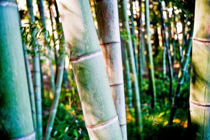 Japan 2001-Bambou Forest-64