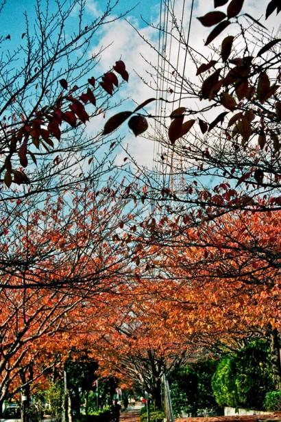 Japan 2001-Tokyo Nature-65