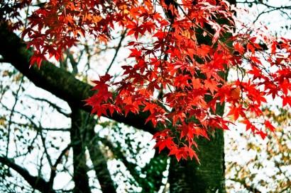 Japan 2001-Tokyo Nature-66